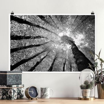 Produktfoto Poster - Bäume des Lebens II - Querformat 2:3