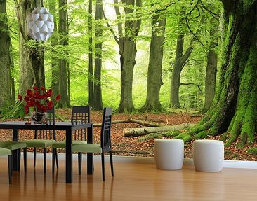 Produktfoto Photo Wall Mural Mighty Beech Trees