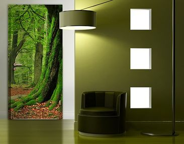 Produktfoto Door Photo Wall Mural Mighty Beech Trees
