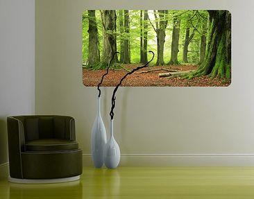 Produktfoto Selbstklebendes Wandbild Mighty Beech Trees