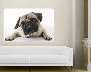 Product picture Wall Mural Pug