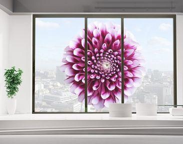 Produktfoto Fensterfolie - Sichtschutz Fenster Aster...