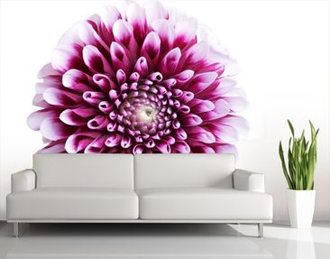 Produktfoto Photo Wall Mural Aster
