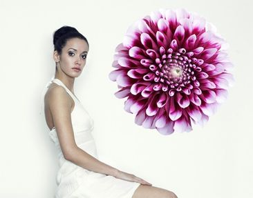 Produktfoto Wall Decal no.431 Aster
