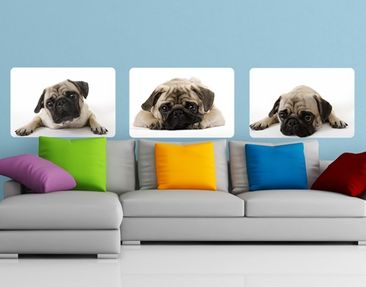 Produktfoto Wall Mural A Pug Seldom Comes Single...