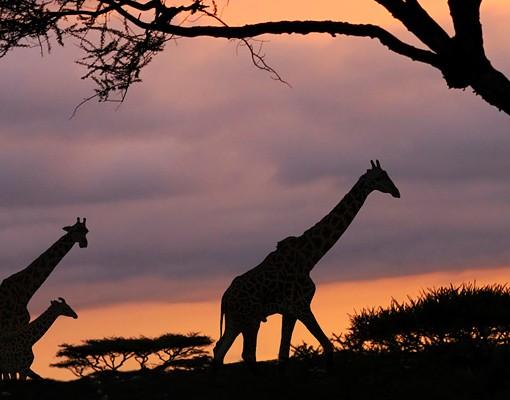 Produktfoto Selbstklebendes Wandbild Safari in Afrika