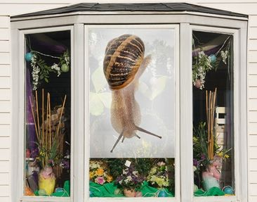 Produktfoto Window Mural Snail Pace