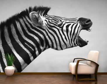 Produktfoto Selbstklebende Tapete - Fototapete Brüllendes Zebra II