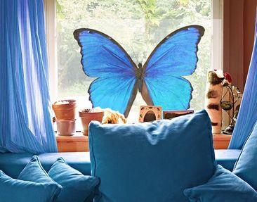 Produktfoto Fensterfolie - Sichtschutz Fenster Blauer Morphofalter - Fensterbilder
