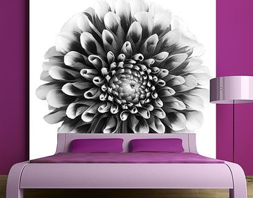 Produktfoto Photo Wall Mural Aster II