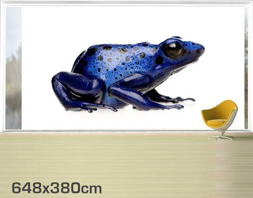 Produktfoto Fensterfolie - XXL Fensterbild Exotischer Frosch - Fenster Sichtschutz