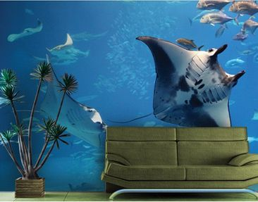 "Product picture Photo wall mural no.121 ""MANTA RAY""..."
