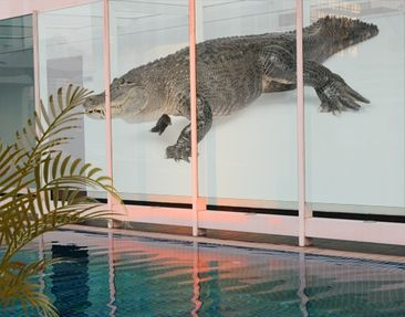 Product picture XXL Window Mural The Fat Crocodile