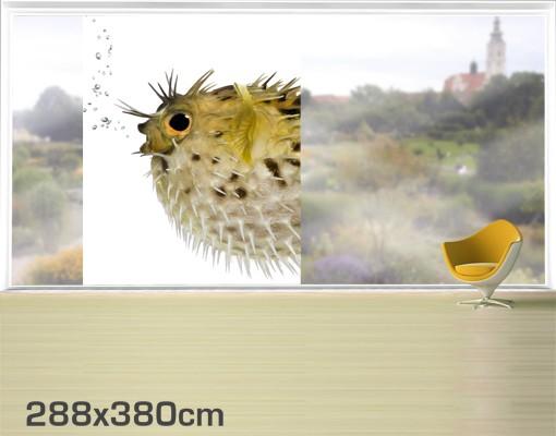 Produktfoto Fensterfolie - XXL Fensterbild Kugelfisch - Fenster Sichtschutz