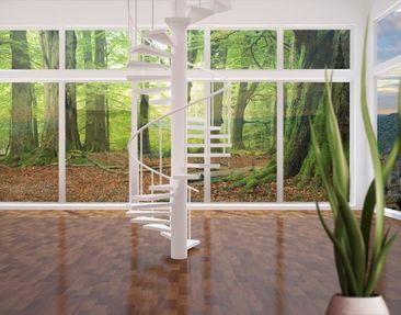 Produktfoto Fensterfolie - XXL Fensterbild Mighty Beech Trees - Fenster Sichtschutz