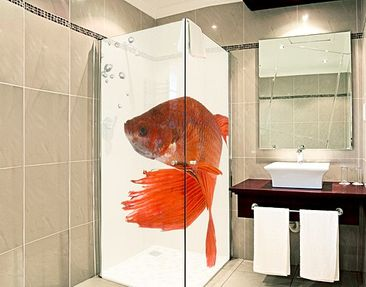 Produktfoto XXL Window Mural Siamese Fighting Fish
