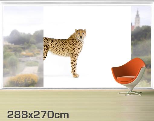 Produktfoto Fensterfolie - XXL Fensterbild Gepard - Fenster Sichtschutz