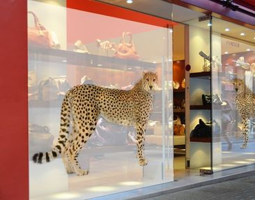 Produktfoto XXL Window Mural Cheetah