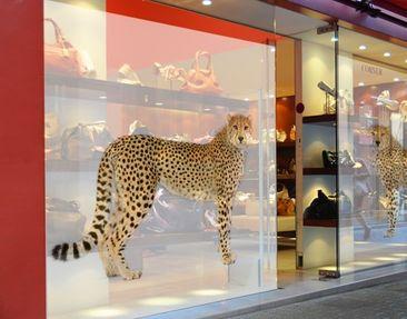 Immagine del prodotto XXL Pellicola per vetri - Cheetah