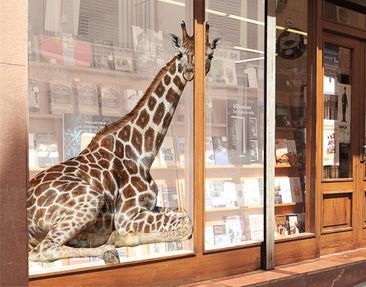 Product picture XXL Window Mural Lying Giraffe