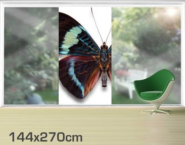Product picture XXL Window Mural Lepidoptera