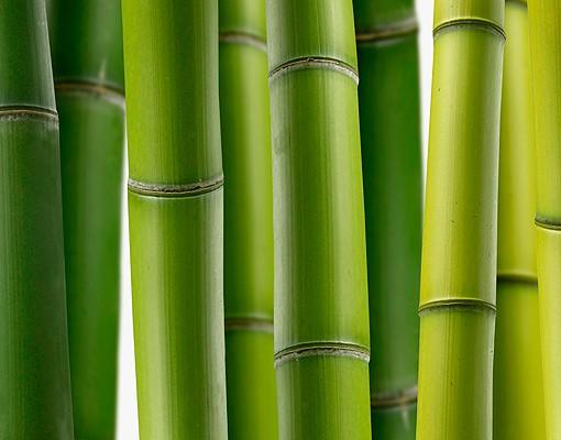 Produktfoto Fensterfolie - XXL Fensterbild Bambuspflanzen - Fenster Sichtschutz