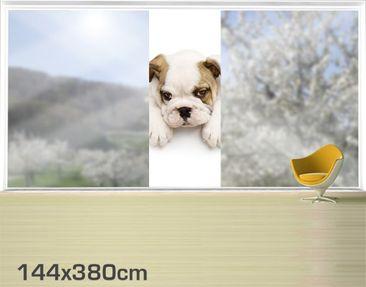 Product picture XXL Window Mural Little Bulldog