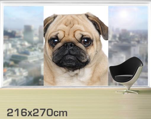 Produktfoto Fensterfolie - XXL Fensterbild Mopsportrait - Fenster Sichtschutz