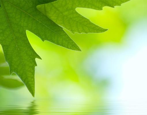 Produktfoto Fensterfolie - XXL Fensterbild Green Ambiance III - Fenster Sichtschutz