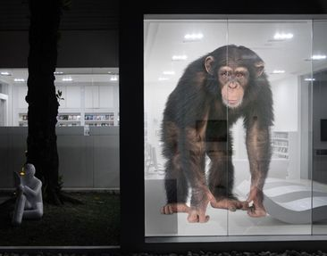 Produktfoto XXL Window Mural Attentive Monkey