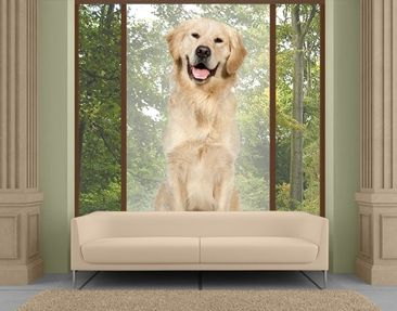 Produktfoto XXL Window Mural Golden Retriever