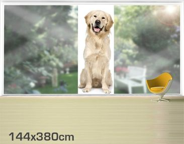 Product picture XXL Window Mural Golden Retriever