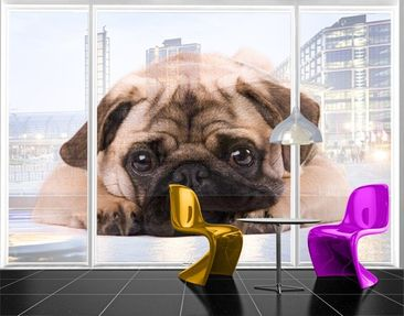 Product picture XXL Window Mural Cuddly Pug