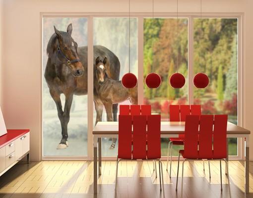Produktfoto Fensterfolie - XXL Fensterbild Trakehnerstute & Fohlen - Fenster Sichtschutz