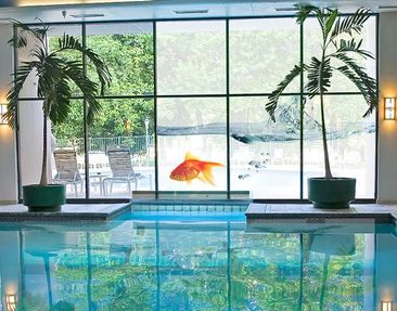 Product picture XXL Window Mural Goldfish