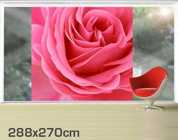 Product picture XXL Window Mural Lustful Pink Rose