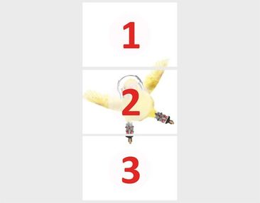 "Product picture Photo wall mural door no.39 ""BUDGIE ON..."