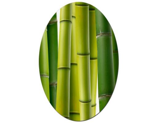 Produktfoto Leinwandbild Oval Bambuspflanzen