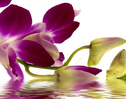 Produktfoto Leinwandbild Oval Pink Orchid Waters