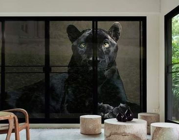 Produktfoto XXL Window Mural Black Puma