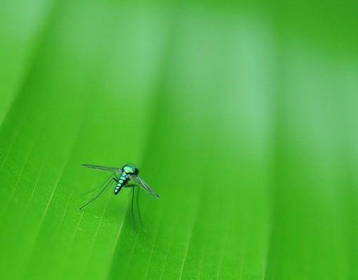 Produktfoto Eckleinwandbild Metal Mosquito 1:1