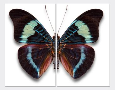 Product picture Corner Canvas Art Lepidoptera 1:1