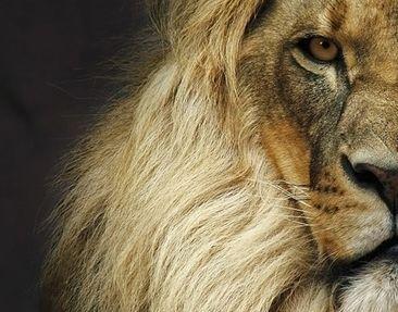 Product picture Corner Canvas Art Wisdom Of Lion 1:1