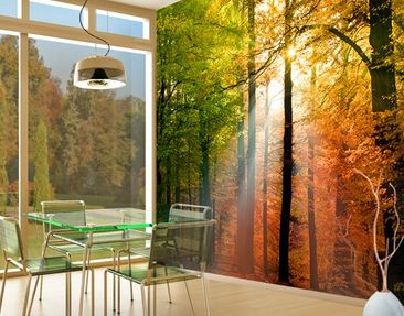 Produktfoto Photo Wall Mural Morning Light