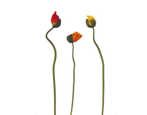 Produktfoto Wandtattoo No.579 Dancing Flowers
