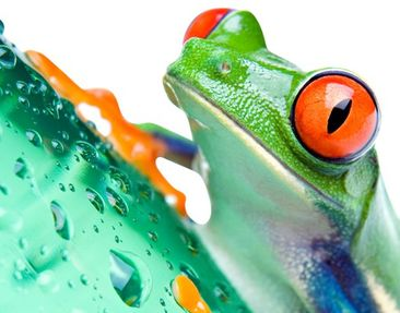 Product picture Wall Decal no.577 Frog
