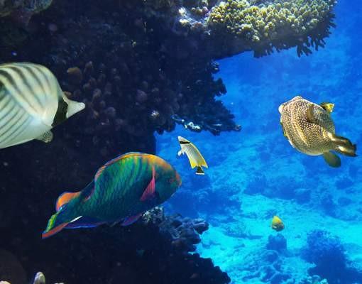 Produktfoto Fensterfolie - XXL Fensterbild Underwater Dreams - Fenster Sichtschutz