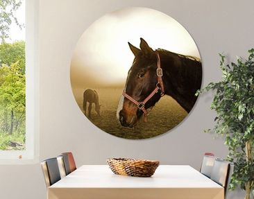 Product picture Canvas Art Circle Early Horse