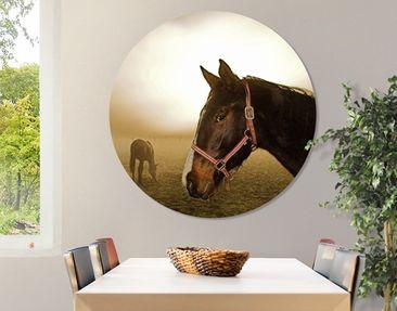 Produktfoto Canvas Art Circle Early Horse