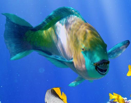 Produktfoto Türtapete Unterwasser - Underwater Reef